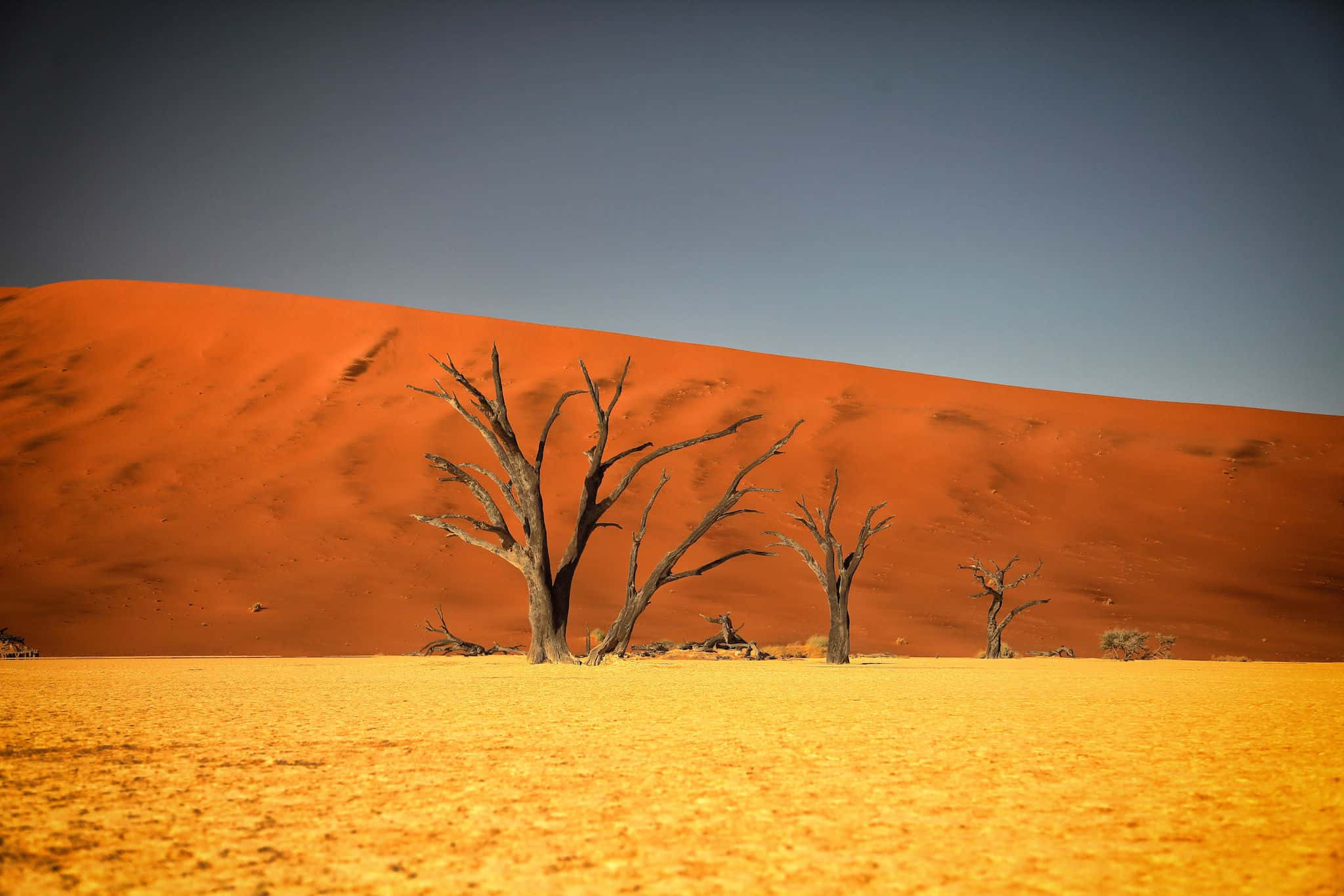 Deadvlei Amazing Place To Visit in Namibia