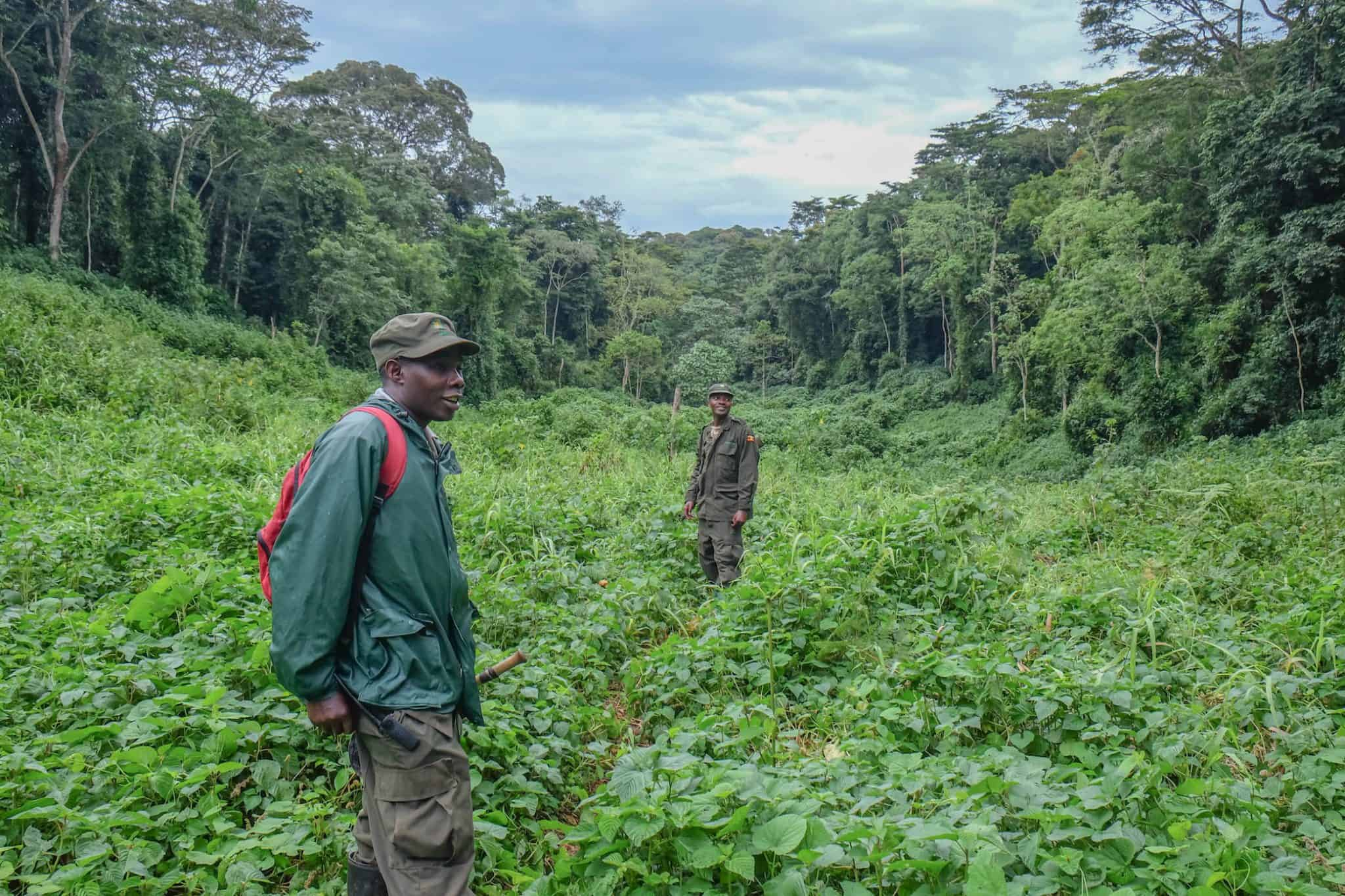Park Rangers in Bwindi Impenetrable Forest