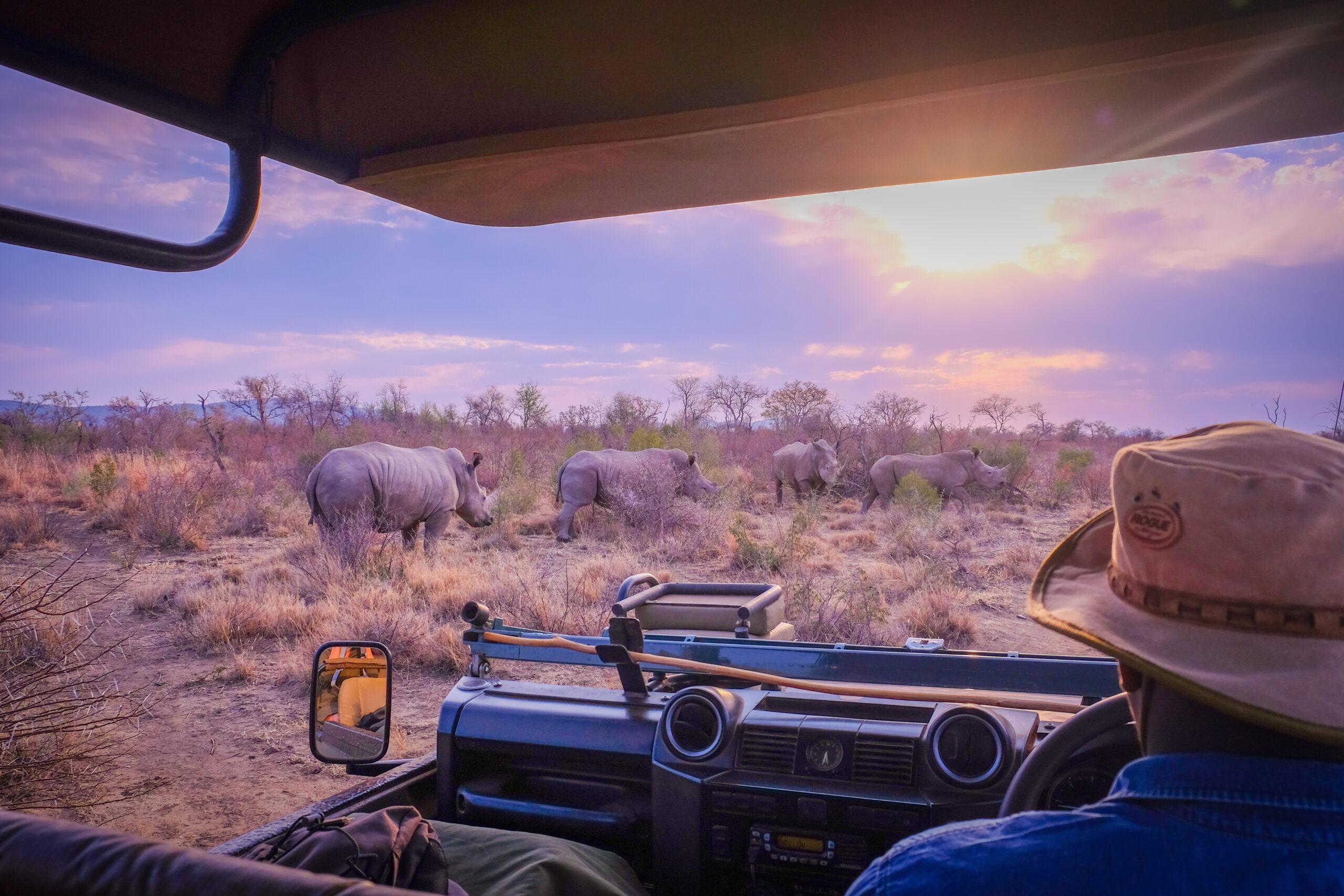 africa safari tips